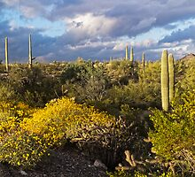 Setting Sun at Organ Pipe Cactus National Monument by Lucinda Walter