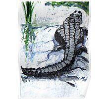 Florida Alligator Poster