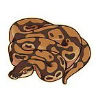 Ball Python - Regular by cargorabbit