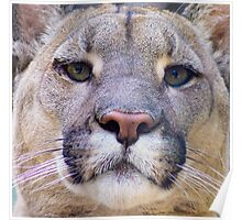 318 Puma Poster