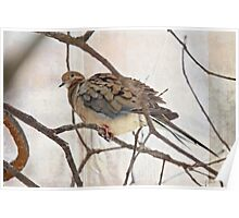 Mourning Dove - Sing No Sad Song for Me #1 Poster