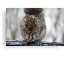 Frozen Peanuts - Yummy! Canvas Print