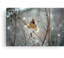 March Snow 1 - Female Northern Cardinal Canvas Print