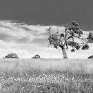 Tree by sedge808