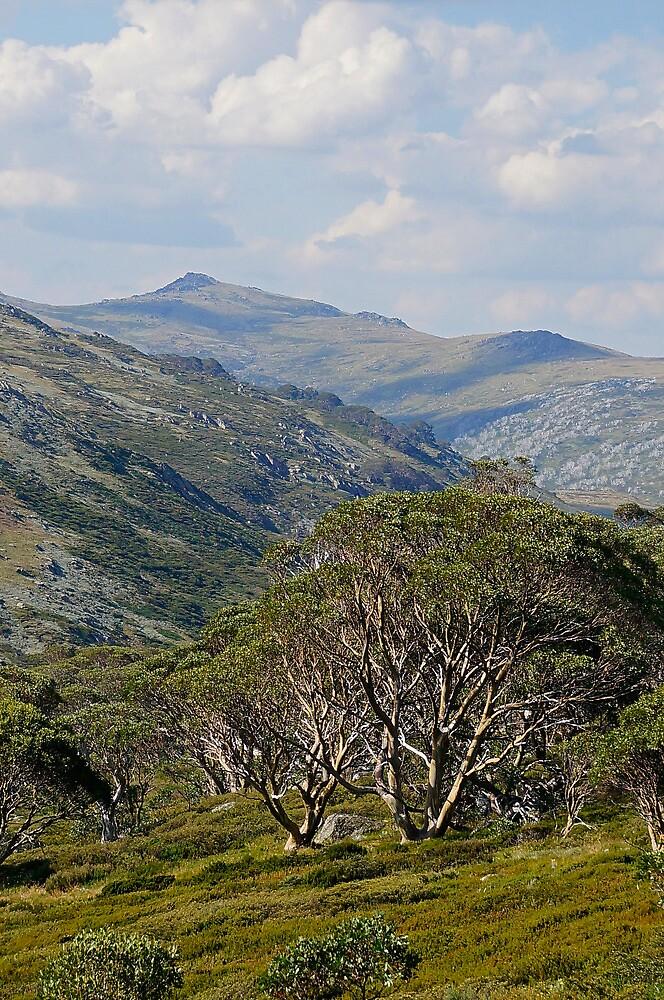 Mt Twynam by Harry Oldmeadow