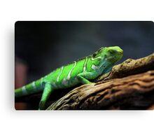 Green Lizard on Tree Branch Canvas Print