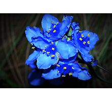 Blue beauties Photographic Print