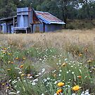 Kellys hut in a field of flowers .Snowy Plain  by Donovan wilson