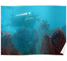 Fan corals and scuba diver Poster
