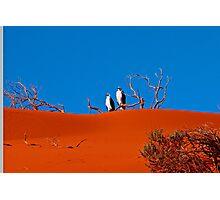 sea eagles on a perch Photographic Print