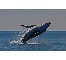whale breach Photographic Print