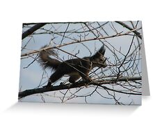 Squirrel with a Bad Hair Day on Our property in Romania Greeting Card