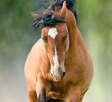 bay stallion in dust by marusya1