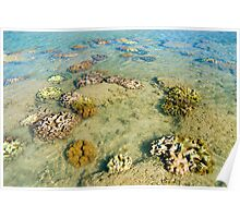 tropical corals Poster