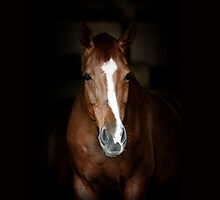horse on black by marusya1
