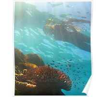 Snorkeling over an underwater reef Poster