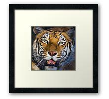 318 cinnamon tiger Framed Print