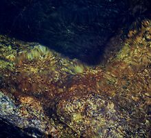 River Rock Abstract 2 by Tim Sousa