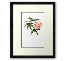 Watercolor bird and flower peony Framed Print