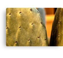 Front Yard Prickly Pear Canvas Print