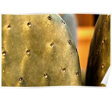 Front Yard Prickly Pear Poster
