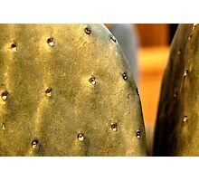 Front Yard Prickly Pear Photographic Print