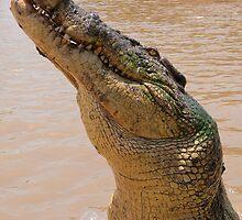 Croc smile, Northern Territory, Australia by Erik Schlogl