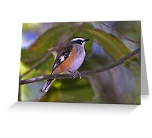 White-browed Robin  Greeting Card