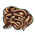 Lesser Ball Python by cargorabbit