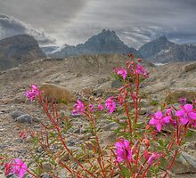 SunDog and the Fireweed by JamesA1