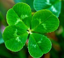lucky clover, lucky day by luckylittle