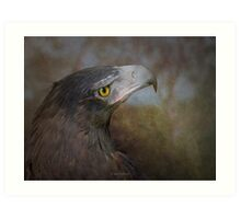Wedge tailed eagle Art Print