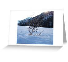 Alone in snow Greeting Card