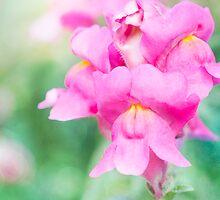 Pretty Pink Snapdragons by Linda Lees