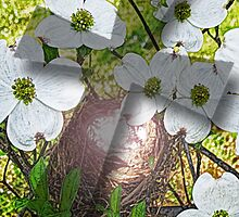 Dogwood Flower and Cross Shadow by Terri Chandler