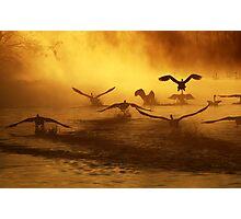 20.3.2014: Swans at River I Photographic Print