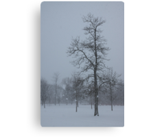 Whispering Snowflakes Canvas Print