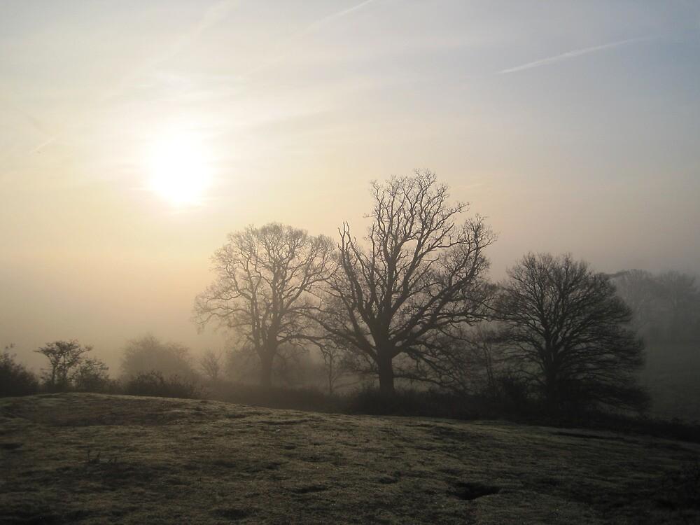 spring dawn VI by uncleblack
