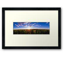 Clifton, Sunflower Fields Framed Print