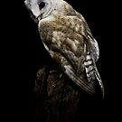 Auction House Owl by Shelly Still