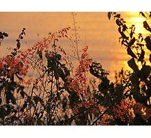 springtide's sunset - puesta del sol en la primavera Photographic Print