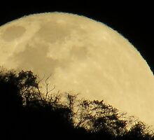 springtide's moonrise - salida de la luna en primavera by Bernhard Matejka