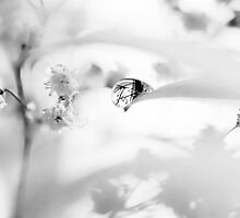 transparent by Ingz