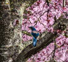 Blue Jay Among the Pink Sticker