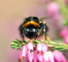 Early Bumblebee by Russell Couch
