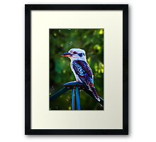 Laundry Bird... Framed Print