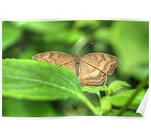 Butterfly on a Leaf Warming its Wings Poster