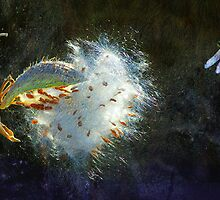 back lit milkweed with dragon fly by R Christopher  Vest