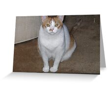 OUR FRIENDS CAT MOLLY WAITING BEHIND THE SCREEN DOOR Greeting Card
