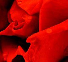 Rose by Orel